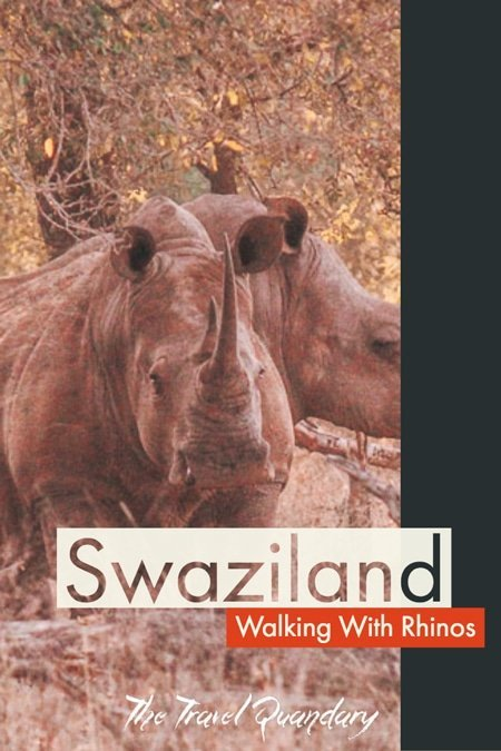 Pin Photo | A walk with rhinos in Swaziland