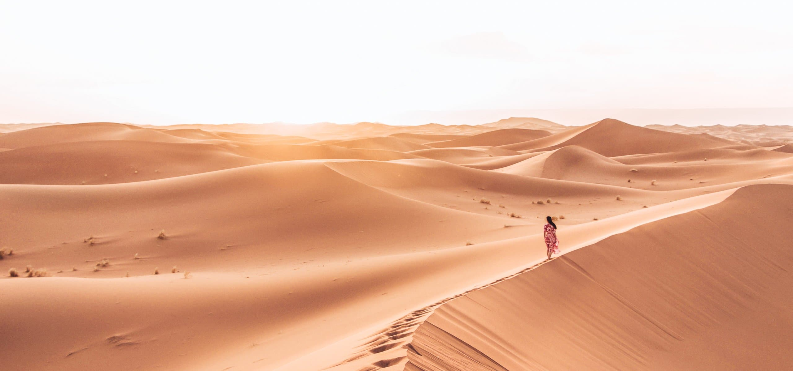 Camping Under The Stars: A Night In The Sahara Desert