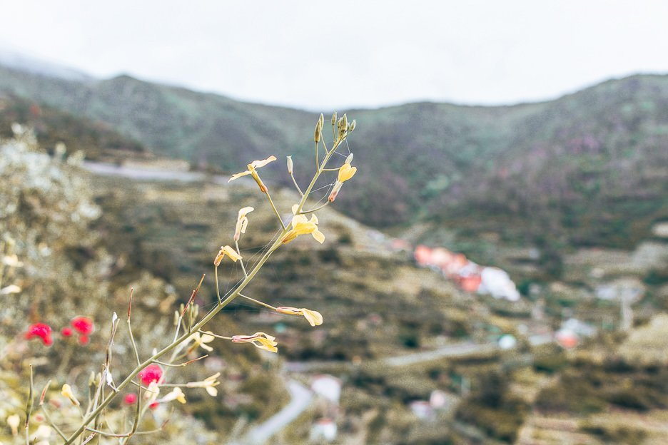 Floral details on the hiking trails, Cinque Terre