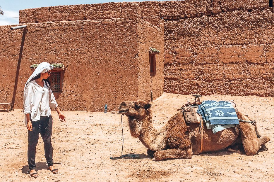 A woman stands in front of a sitting camel, Morocco