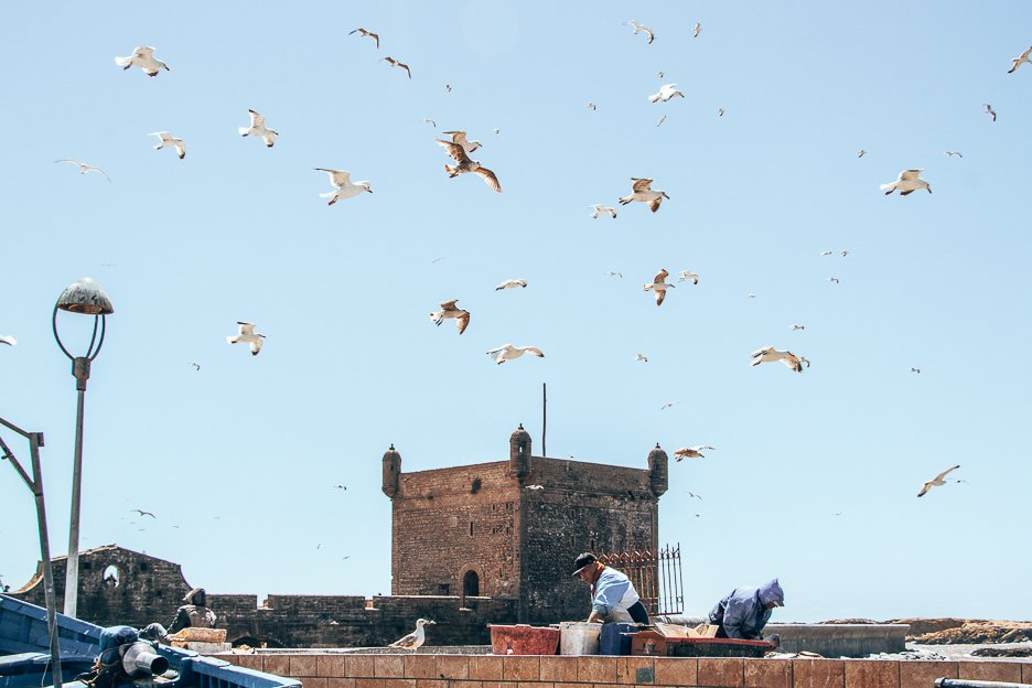 Fisherman preparing their catch to sell at the market in Essaouira